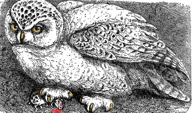 Owlpaint